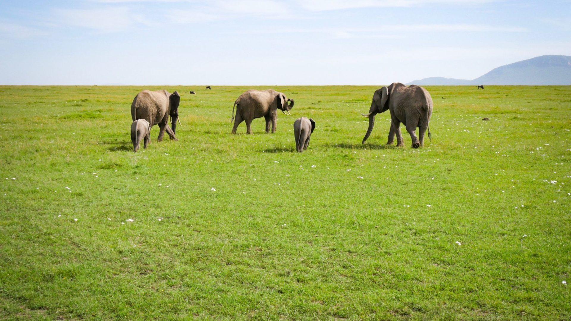 Masai Mara Kenya14