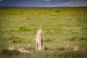 Masai Mara Kenya15