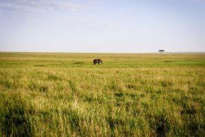 Masai Mara Kenya18