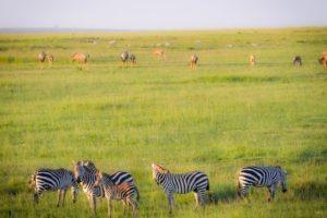 Masai Mara Kenya2