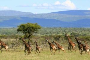 Masai Mara Kenya20