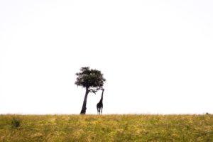 Masai Mara Kenya4