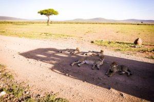 Masai Mara Kenya5
