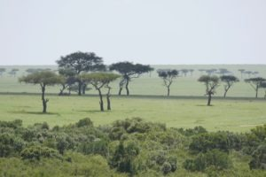 Masai Mara Kenya6