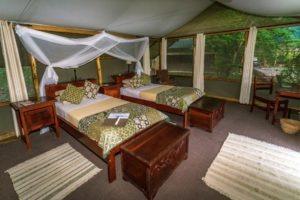 ishasha wilderness camp uganda twin