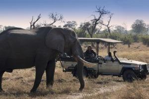 khwai tented camp botswana elephant