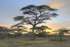 ndutu safari lodge sunset