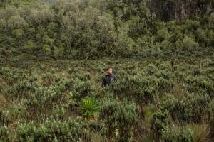 rwenzori trekking uganda field 1