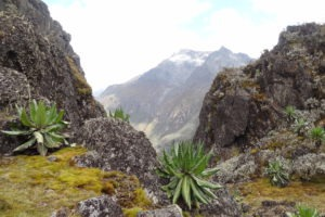 rwenzori trekking uganda scott elliot pass 1