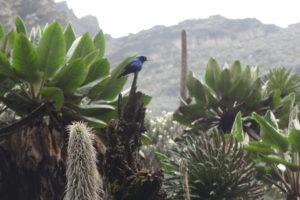 rwenzori trekking uganda sun bird 1