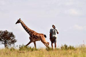 Giraffe running past walk 1