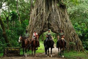 Pferdesafari Fig Tree Arusha