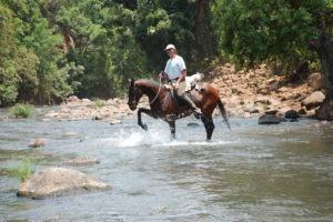 Pferdesafari Flussdurchquerung