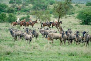 Pferdesafari Migration Ride South Amboseli