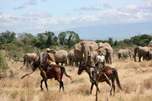 Pferdesafari Süd Amboseli 1