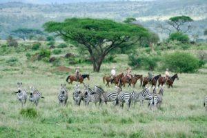 Pferdesafari Süd Amboseli