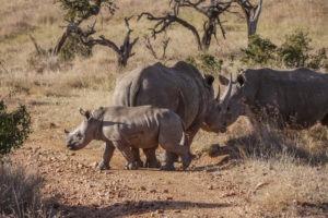 Rhino 5 edited