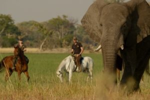 Guides with elephant