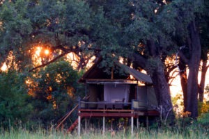 Mokolowane Treehouse