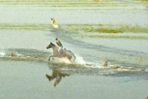 Okavango Delta Canter in Water 2