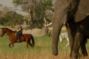 Okavango Delta Ride Elephant