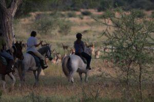 Ride Zimbabwe Horses 2