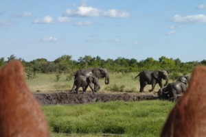 Ride Zimbabwe Skany ears