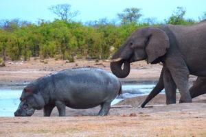 Ride Zimbabwe hippo