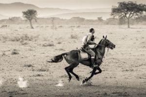 Horse Safari On the gallop