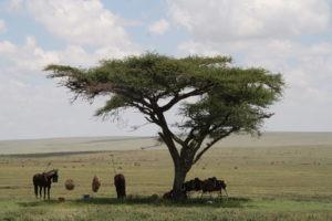 Kaskazi Horse Safari