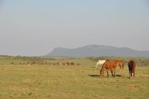 Kaskazi Horse Safari 27