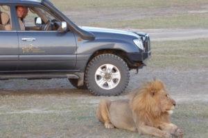 Kaskazi Horse Safari Lion