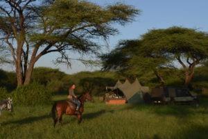Kilimanjaro Elephant ride 21