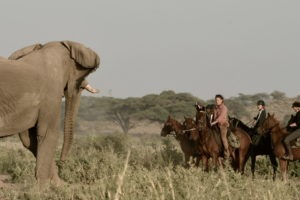 Kilimanjaro Elephant ride 49