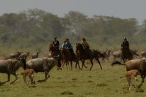 Kilimanjaro Elephant ride 52