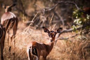 Lisa Blog Sambia SuedafrikaIMG 71152