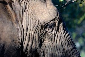 Lisa Blog Sambia SuedafrikaIMG 72974