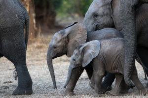 Lisa Blog Sambia SuedafrikaIMG 79508