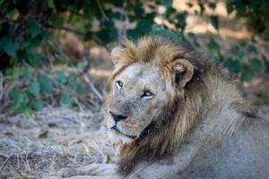 Lisa Blog Sambia SuedafrikaIMG 805710