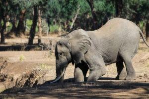 Lisa Blog Sambia SuedafrikaIMG 836614