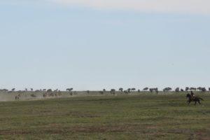 Serengeti 31