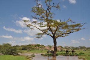 Serengeti 47