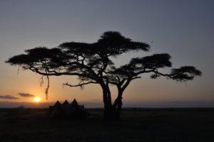 Serengeti 54