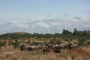 Big Game Trail elephants