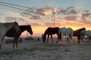 Living with Horses