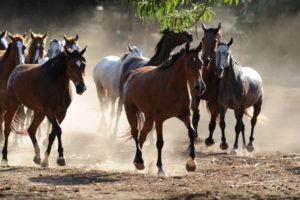 Makoa Pferde.DSC 1454