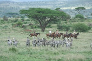 Migration Ride South Amboseli .2008 035