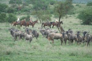 Migration Ride South Amboseli 17.03.2008 032