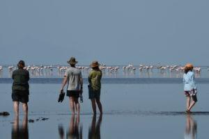 Natron Flamingo Ride 59