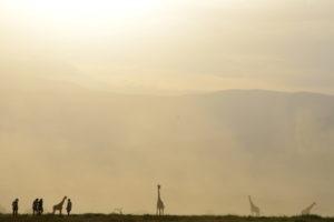 Natron Flamingo Ride giraffes 2